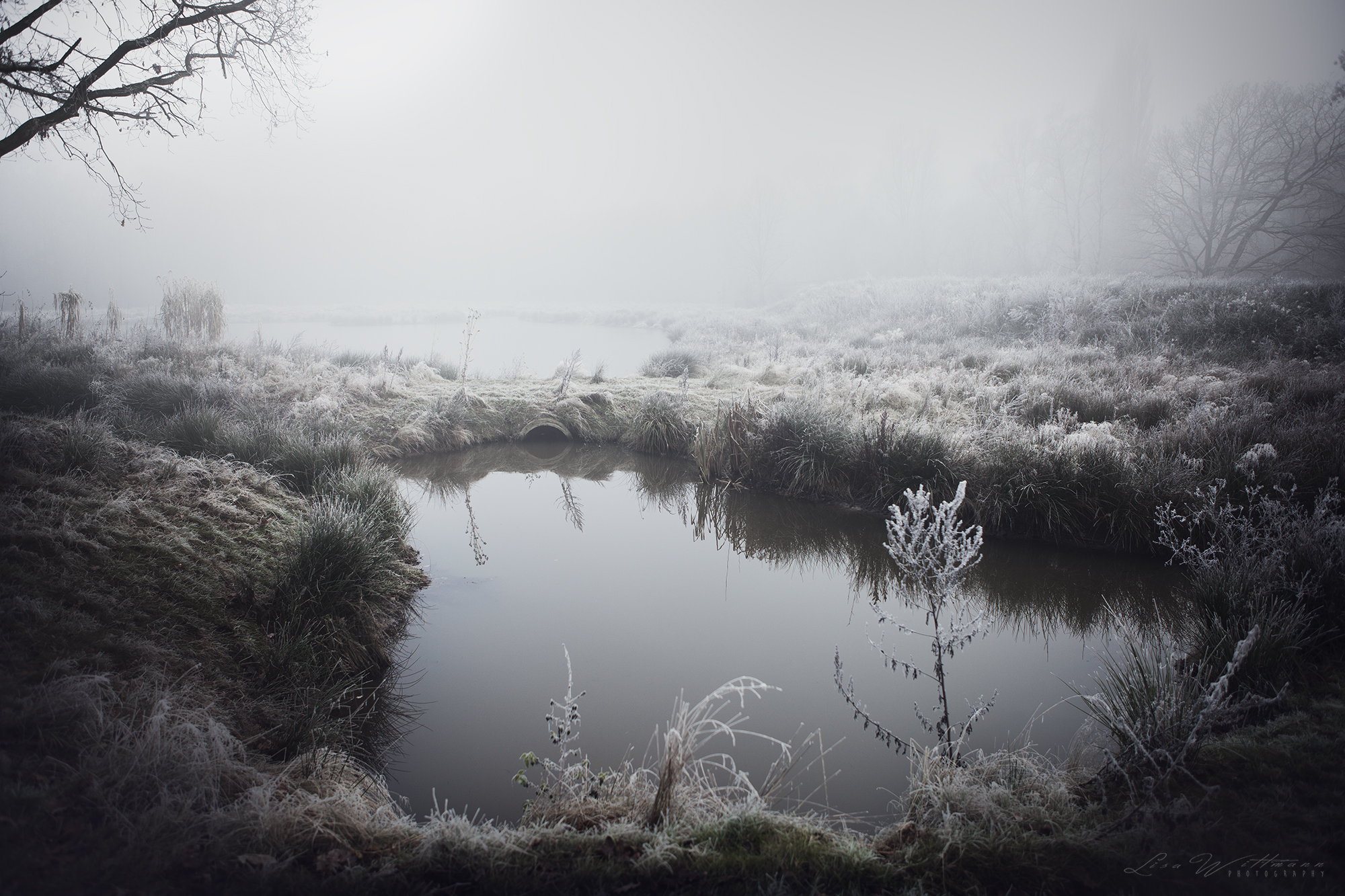 landscape_dust_fog_lake_tree_winter_christmas_atmosphere_cold_lisa_wittmann_photography_canon_dream_calm_freeze_nature