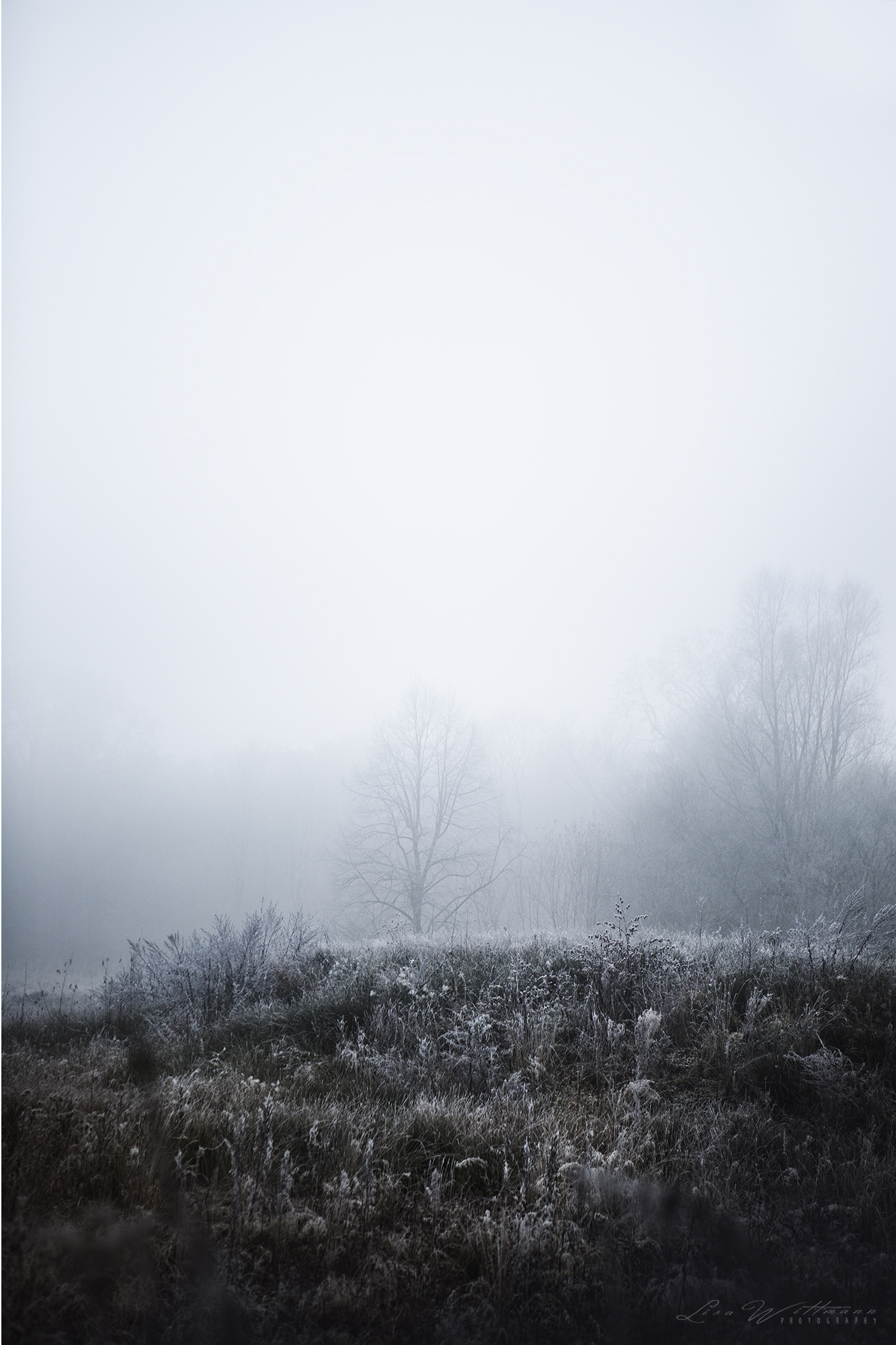 landscape_dust_fog_lake_tree_winter_christmas_atmosphere_cold_lisa_wittmann_photography_canon_dream_calm_freeze_nature__
