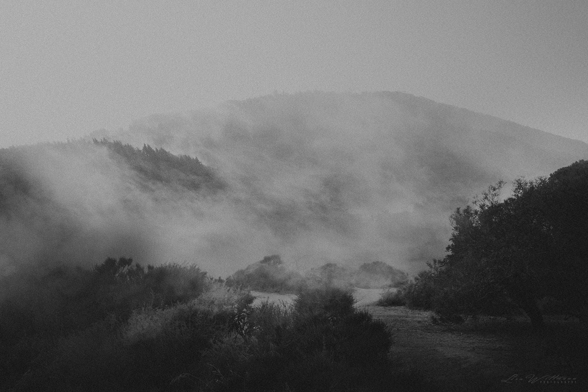 lisa_wittmann_photography_nature_forest_fog_tree_rain_epic_dream_beautiful_canon_rain_light_black_white_roots_mountain_sky_silent_portugal_hiking_travel_analogue